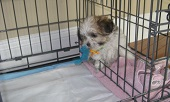 Image Result For Modern Puppies Indoor Dog Potty Potty Training A