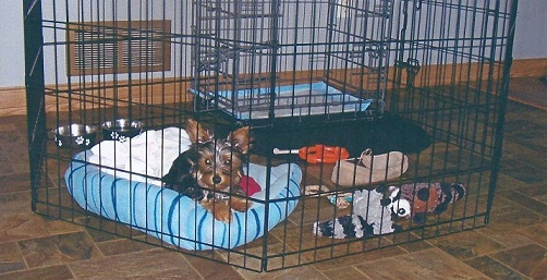 Puppy Apartment Reviews Modern Puppies